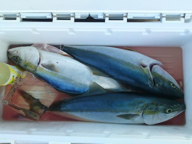 メジロ、ハマチ、ツバスが…。9月5日ジギング船釣果です